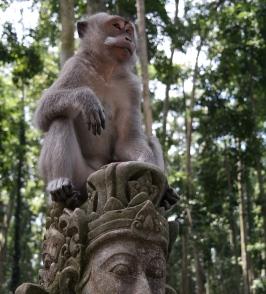 Sangeh Monkey Forest