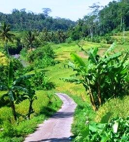 Landscape at Candi Umbul