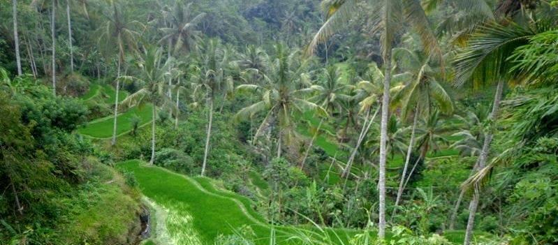 rice terracess