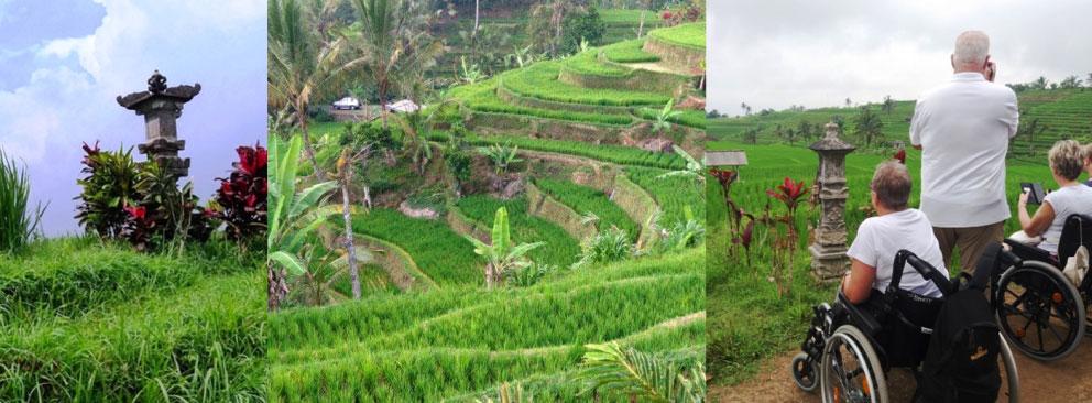 Rice terrasses. 14 Tage Bali mit rollstuhlfreundlichen Ausflügen