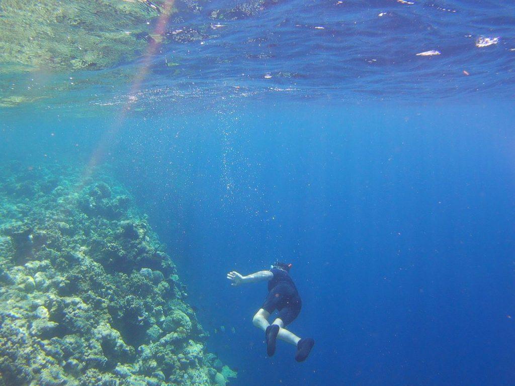 Menjangan snorkling