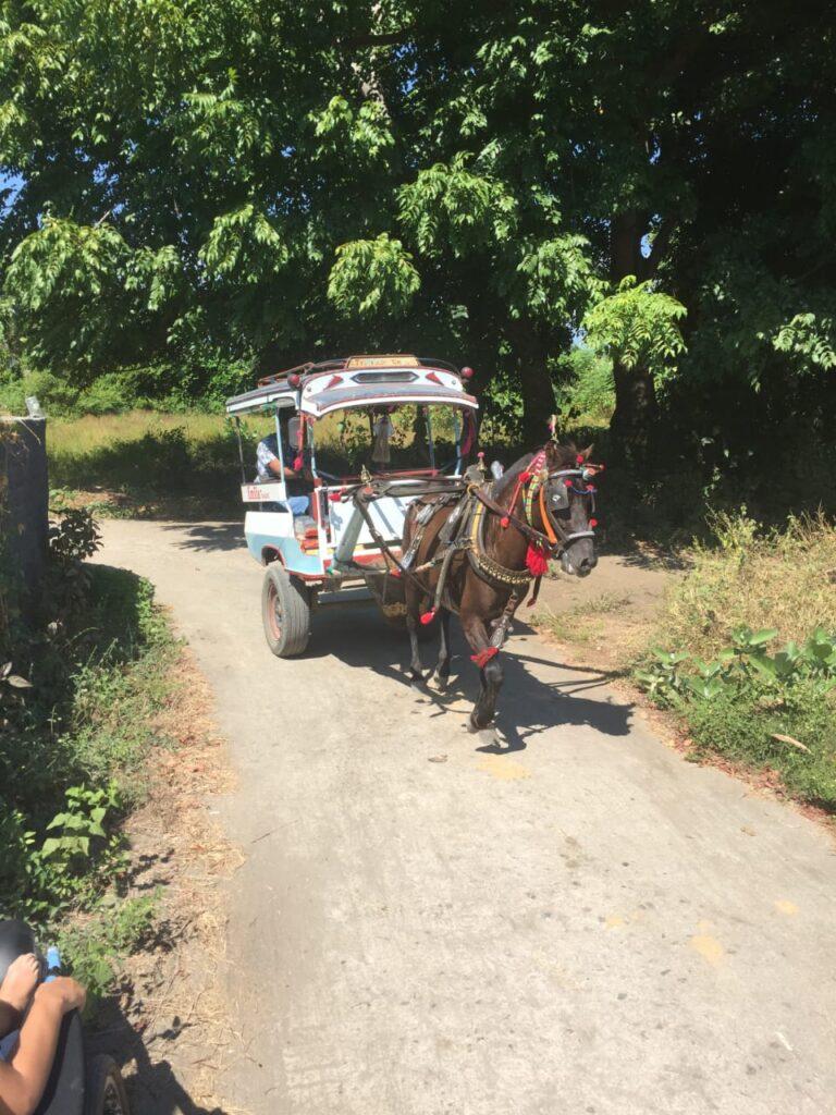 Horse cart Gili air